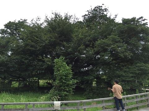 kumamoto34.jpg